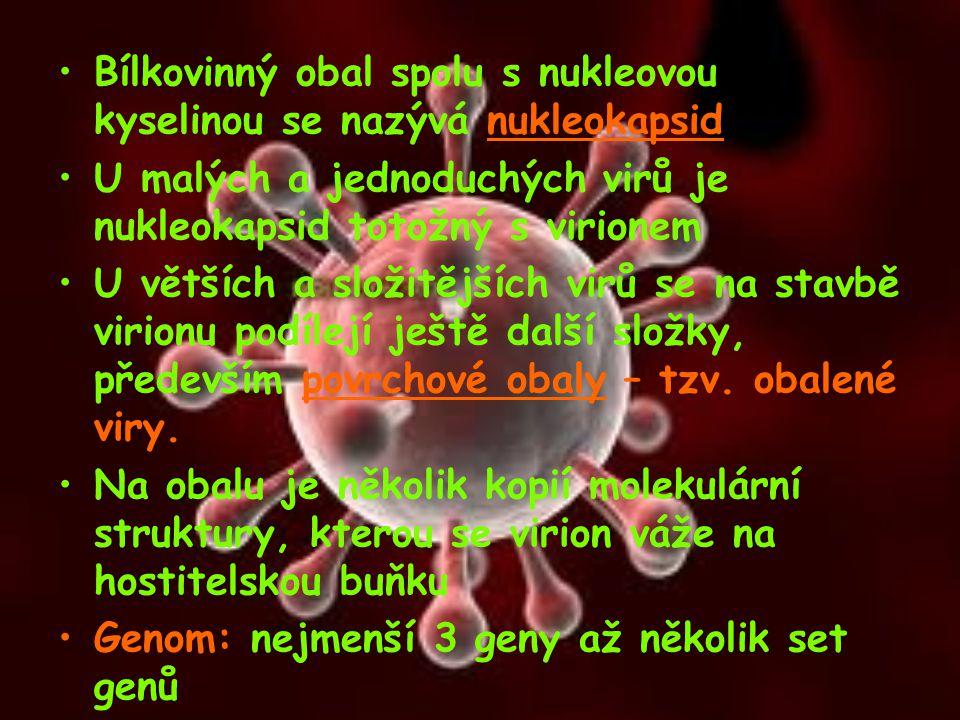 Bílkovinný obal spolu s nukleovou kyselinou se nazývá nukleokapsid U malých a jednoduchých virů je nukleokapsid totožný s virionem U větších a složitě