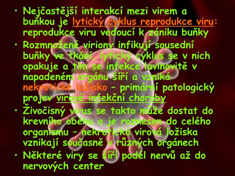 Nejčastější interakcí mezi virem a buňkou je lytický cyklus reprodukce viru: reprodukce viru vedoucí k zániku buňky Rozmnožené viriony infikují soused
