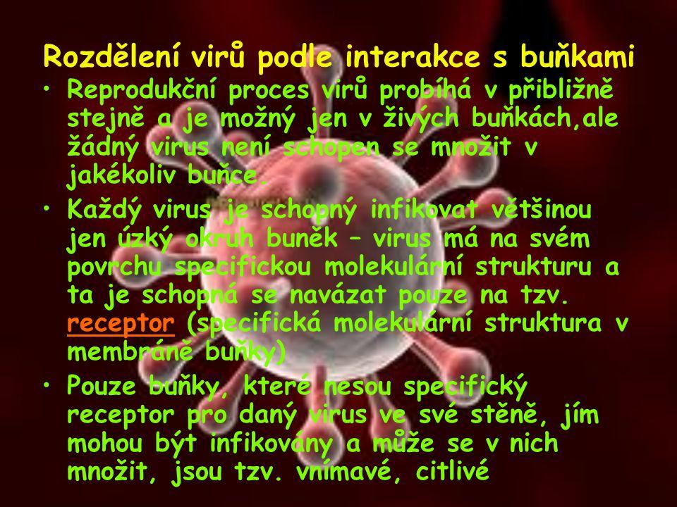Rozdělení virů podle interakce s buňkami Reprodukční proces virů probíhá v přibližně stejně a je možný jen v živých buňkách,ale žádný virus není schop