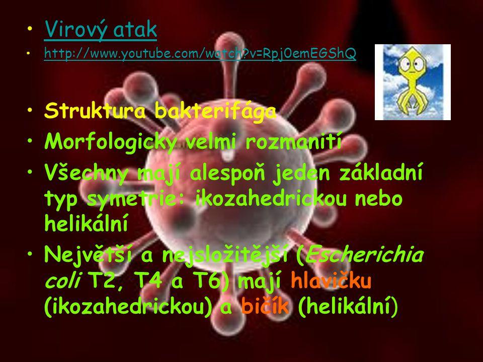 Virový atak http://www.youtube.com/watch?v=Rpj0emEGShQ Struktura bakterifága Morfologicky velmi rozmanití Všechny mají alespoň jeden základní typ syme