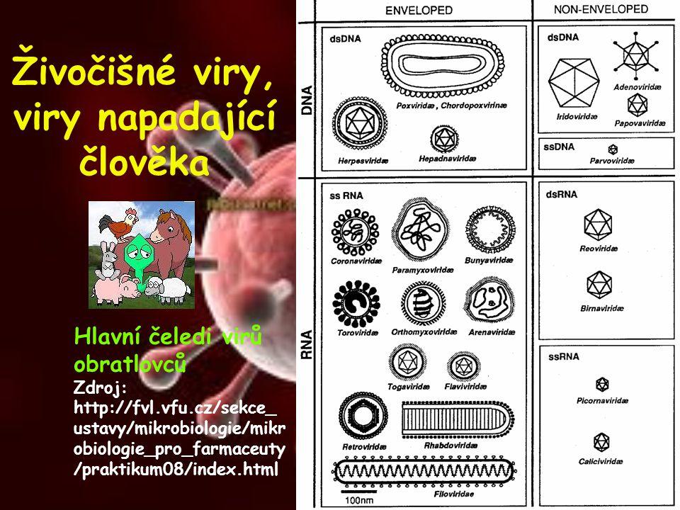 Živočišné viry, viry napadající člověka Hlavní čeledi virů obratlovců Zdroj: http://fvl.vfu.cz/sekce_ ustavy/mikrobiologie/mikr obiologie_pro_farmaceu