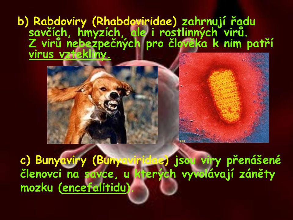 b) Rabdoviry (Rhabdoviridae) zahrnují řadu savčích, hmyzích, ale i rostlinných virů. Z virů nebezpečných pro člověka k nim patří virus vztekliny. c) B