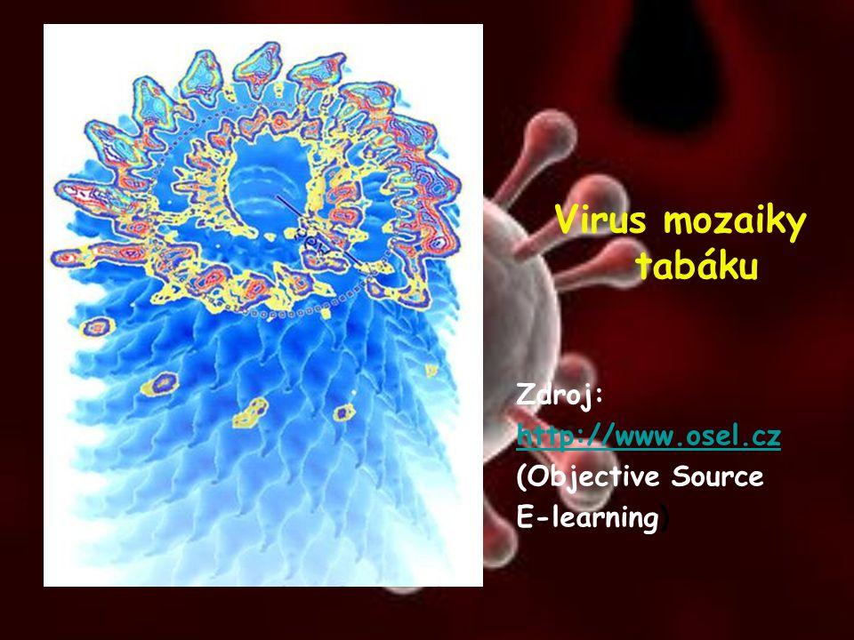 Virus mozaiky tabáku Zdroj: http://www.osel.cz (Objective Source E-learning)