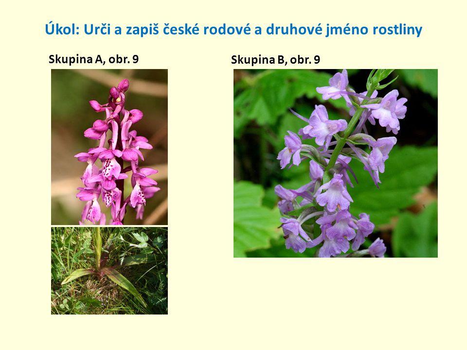 Úkol: Urči a zapiš české rodové a druhové jméno rostliny Skupina A, obr. 9 Skupina B, obr. 9