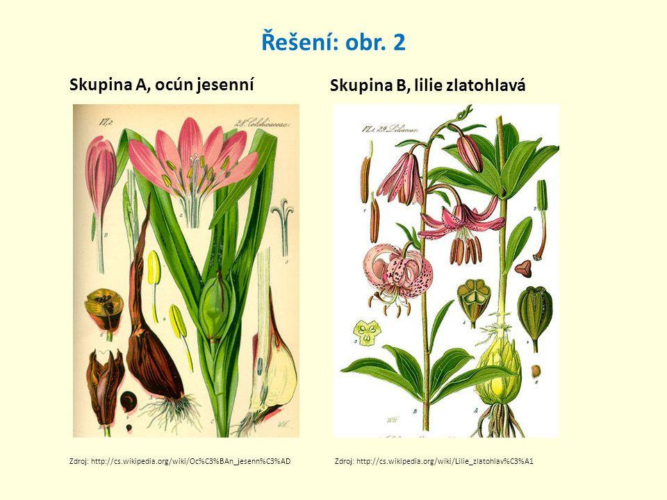 Řešení: obr. 2 Skupina A, ocún jesenní Skupina B, lilie zlatohlavá Zdroj: http://cs.wikipedia.org/wiki/Oc%C3%BAn_jesenn%C3%ADZdroj: http://cs.wikipedi