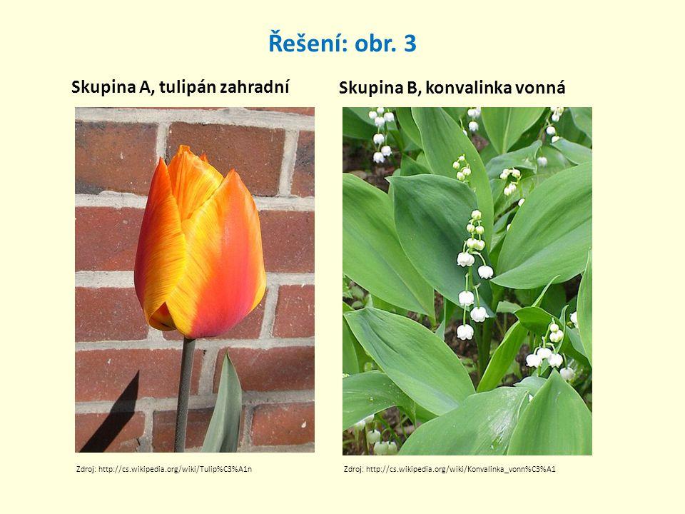 Řešení: obr. 3 Skupina A, tulipán zahradní Skupina B, konvalinka vonná Zdroj: http://cs.wikipedia.org/wiki/Konvalinka_vonn%C3%A1Zdroj: http://cs.wikip