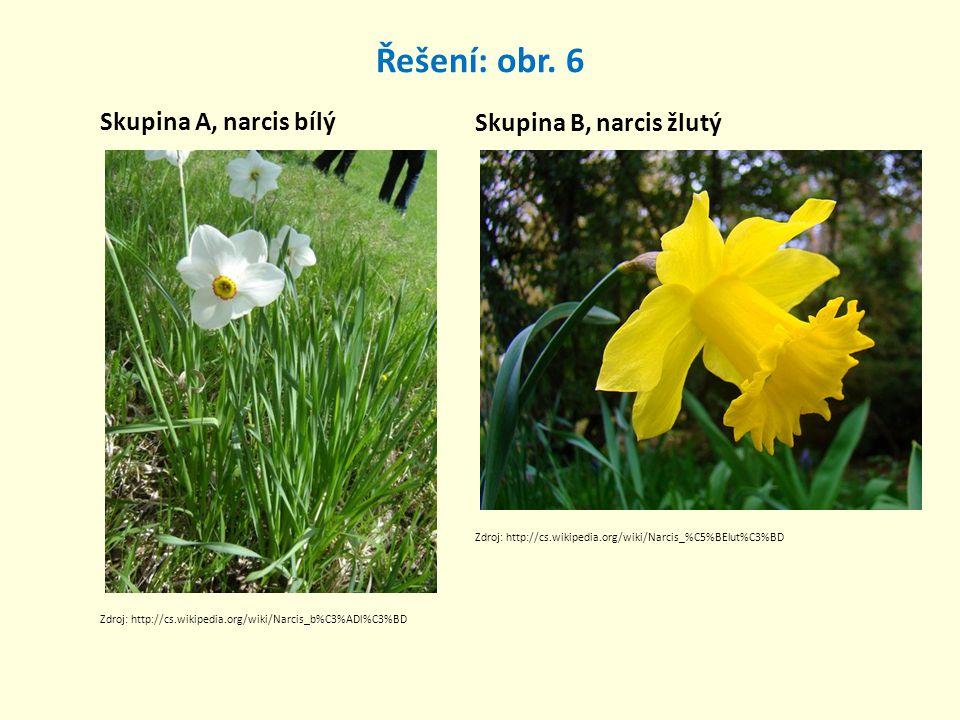 Řešení: obr. 6 Skupina A, narcis bílý Skupina B, narcis žlutý Zdroj: http://cs.wikipedia.org/wiki/Narcis_b%C3%ADl%C3%BD Zdroj: http://cs.wikipedia.org