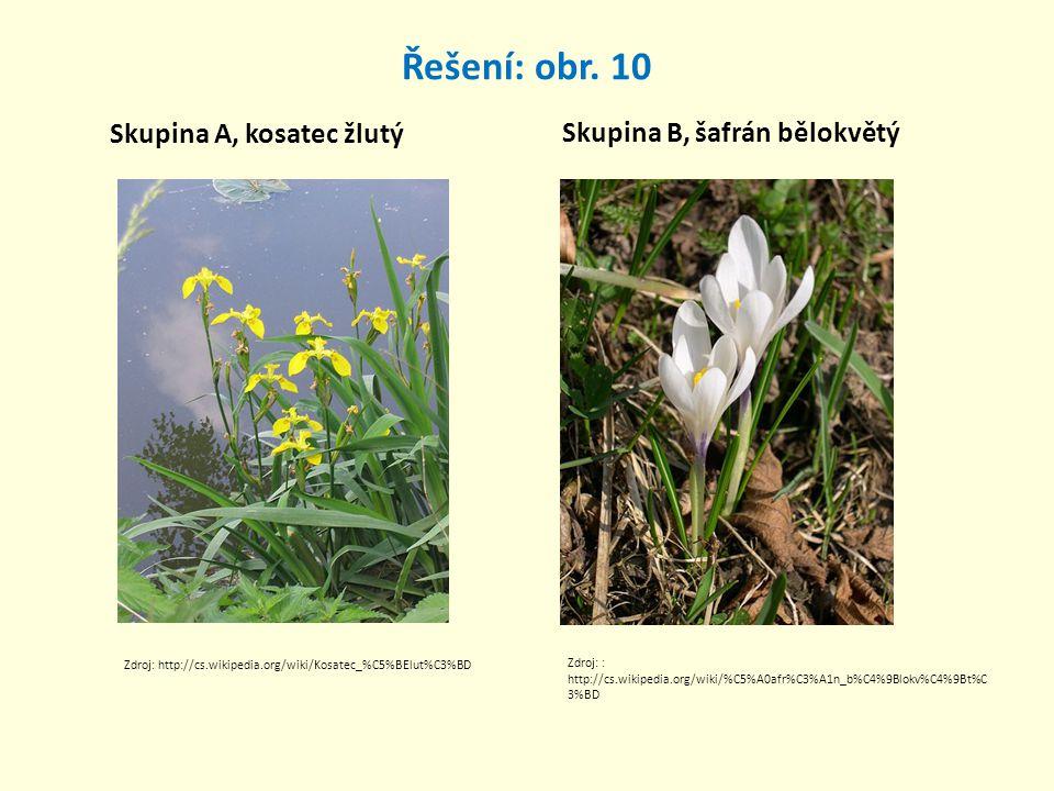 Řešení: obr. 10 Skupina A, kosatec žlutý Skupina B, šafrán bělokvětý Zdroj: http://cs.wikipedia.org/wiki/Kosatec_%C5%BElut%C3%BD Zdroj: : http://cs.wi