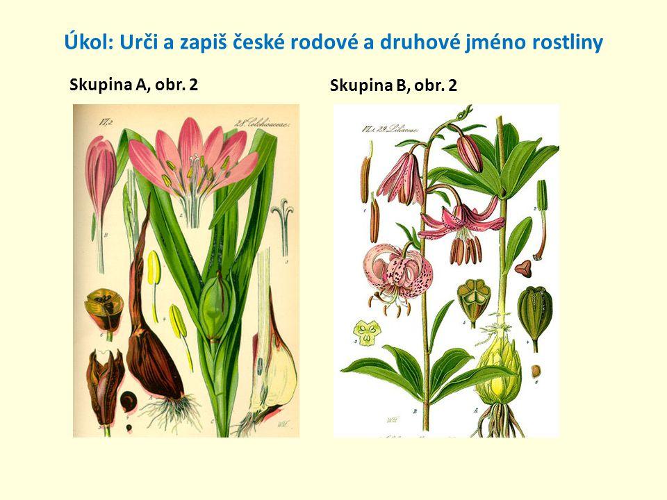 Úkol: Urči a zapiš české rodové a druhové jméno rostliny Skupina A, obr. 3 Skupina B, obr. 3
