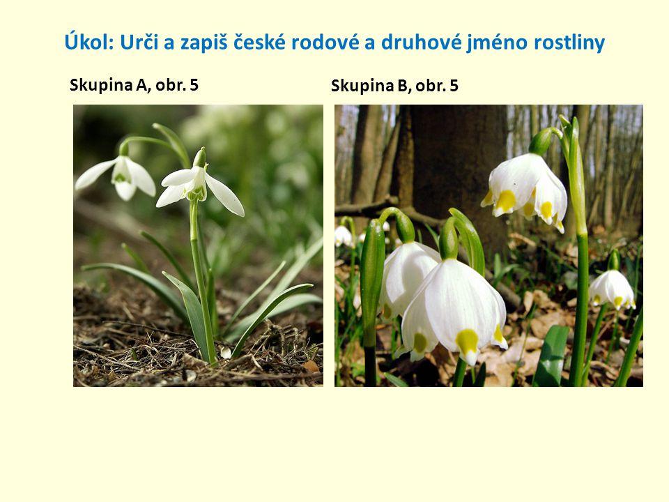 Úkol: Urči a zapiš české rodové a druhové jméno rostliny Skupina A, obr. 5 Skupina B, obr. 5