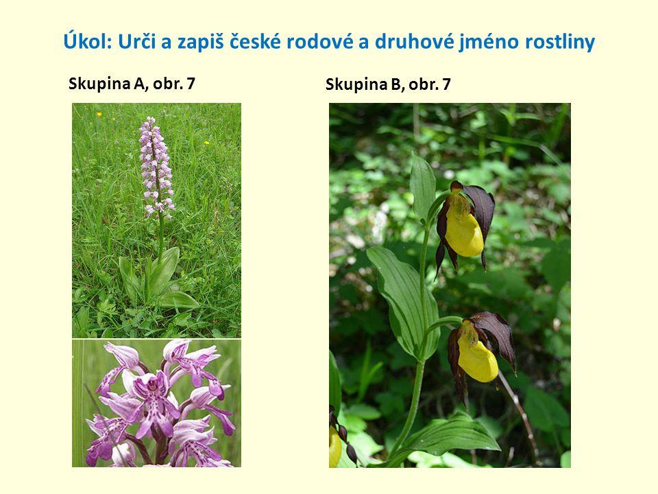 Úkol: Urči a zapiš české rodové a druhové jméno rostliny Skupina A, obr. 8 Skupina B, obr. 8