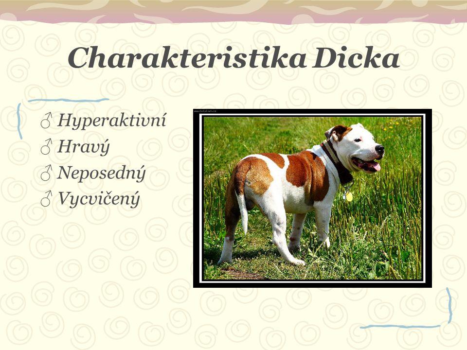 Charakteristika Dicka ♂ Hyperaktivní ♂ Hravý ♂ Neposedný ♂ Vycvičený
