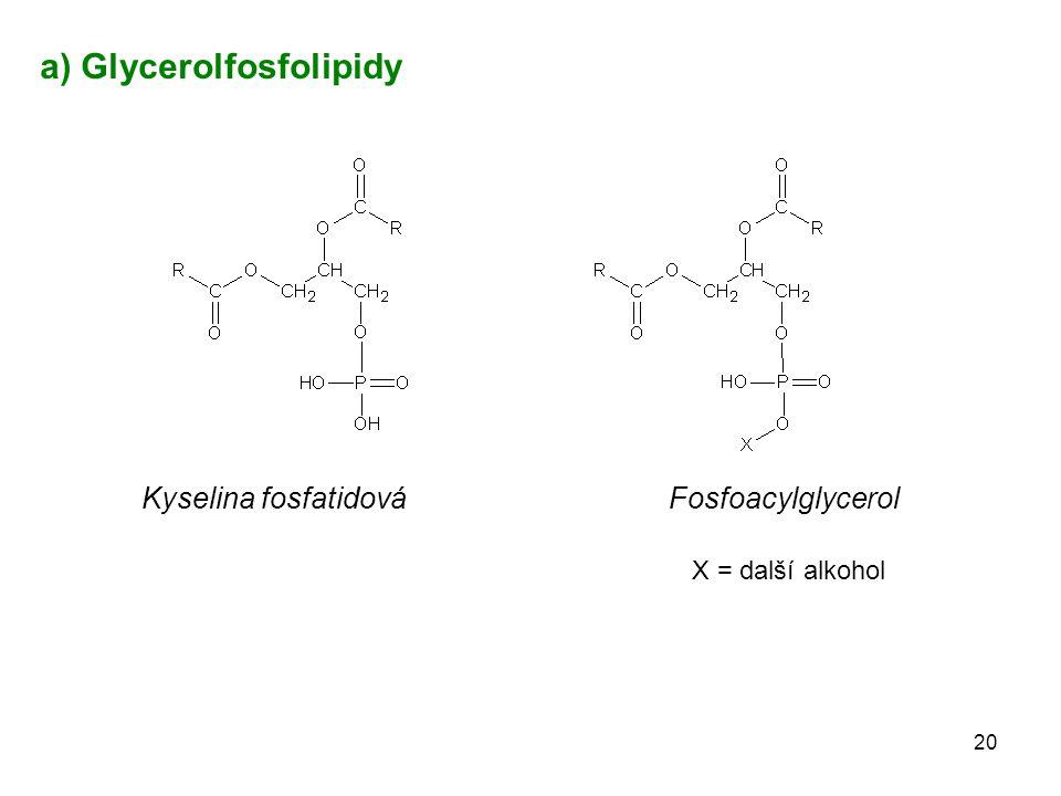 20 Kyselina fosfatidováFosfoacylglycerol a) Glycerolfosfolipidy X = další alkohol