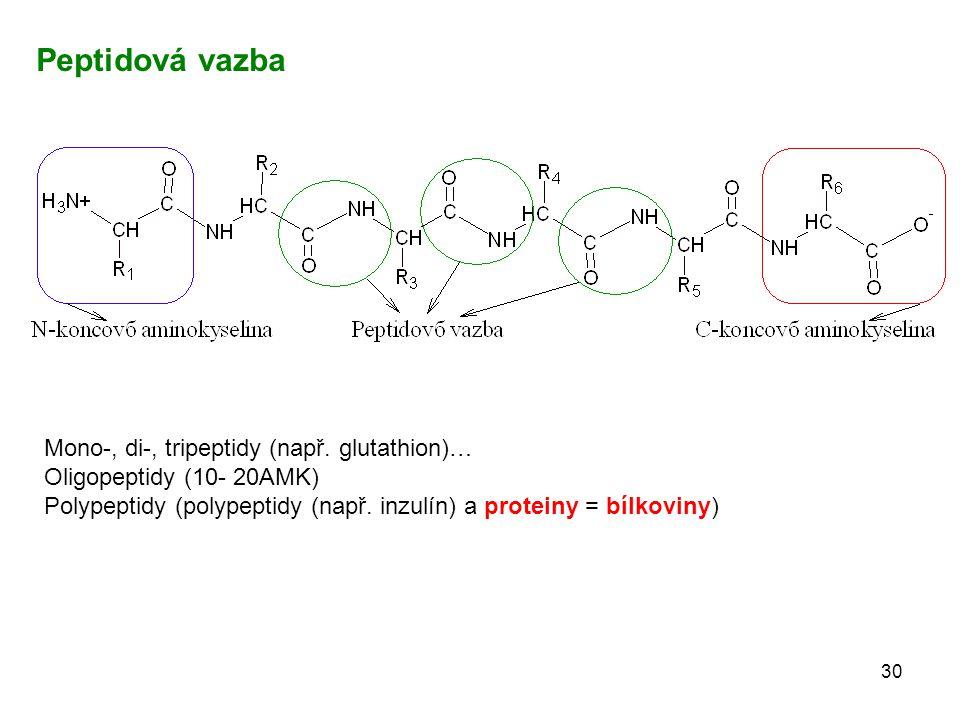 30 Mono-, di-, tripeptidy (např. glutathion)… Oligopeptidy (10- 20AMK) Polypeptidy (polypeptidy (např. inzulín) a proteiny = bílkoviny) Peptidová vazb