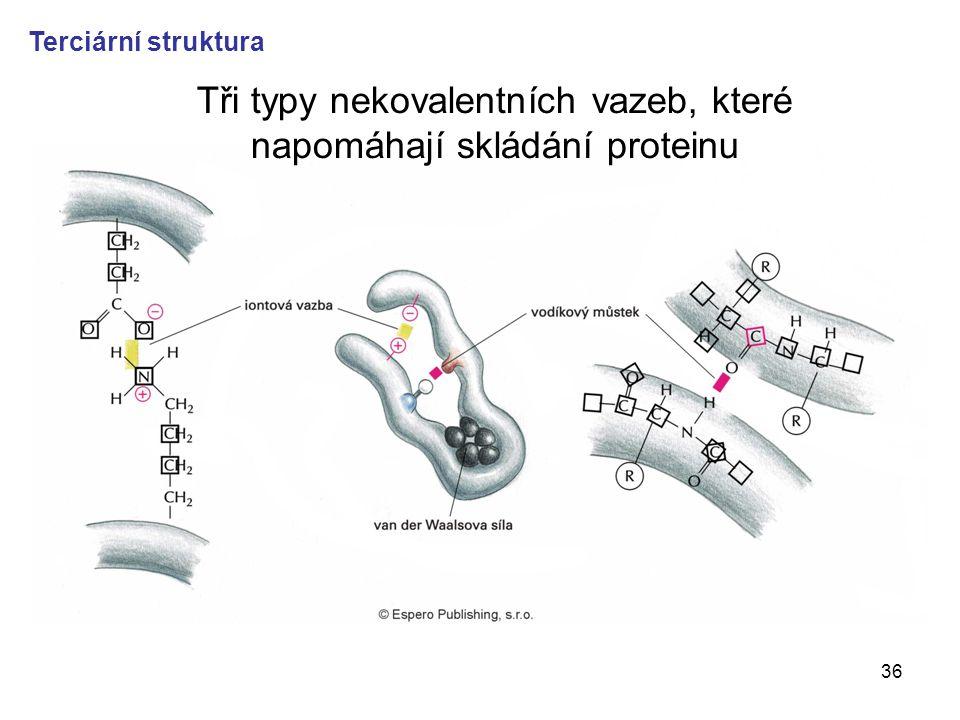 36 Tři typy nekovalentních vazeb, které napomáhají skládání proteinu Terciární struktura