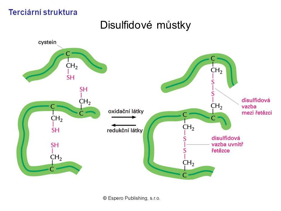 37 Disulfidové můstky Terciární struktura