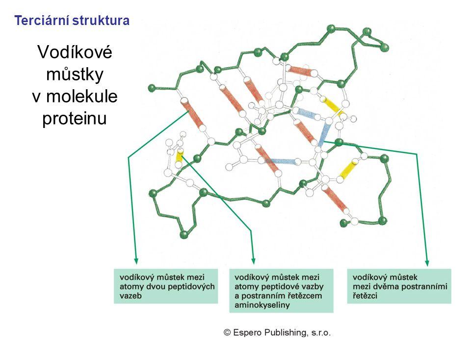 38 Vodíkové můstky v molekule proteinu Terciární struktura