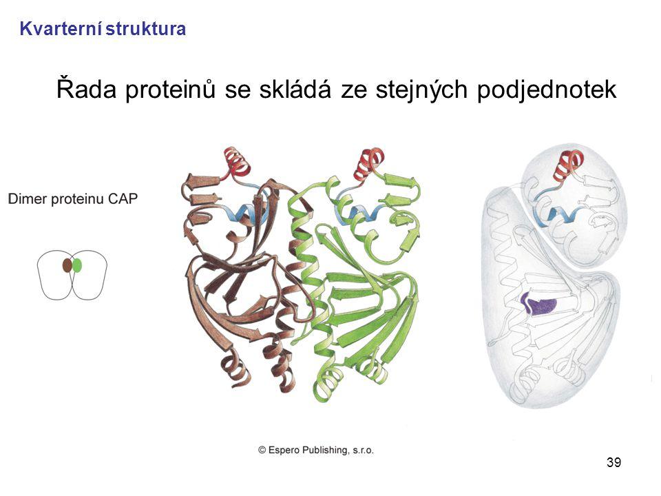 39 Řada proteinů se skládá ze stejných podjednotek Kvarterní struktura