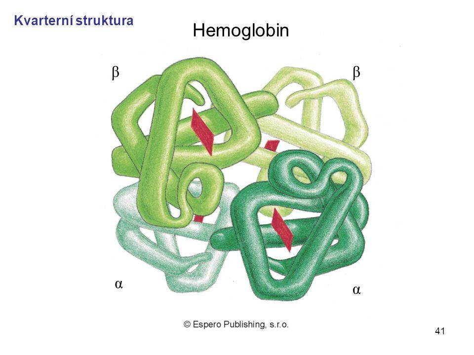 41 ββ α α Hemoglobin Kvarterní struktura