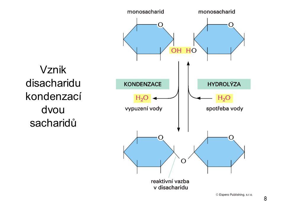 8 Vznik disacharidu kondenzací dvou sacharidů