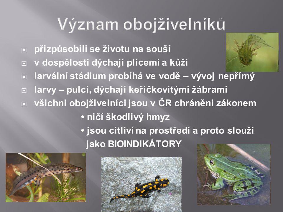  přizpůsobili se životu na souší  v dospělosti dýchají plícemi a kůži  larvální stádium probíhá ve vodě – vývoj nepřímý  larvy – pulci, dýchají keříčkovitými žábrami  všichni obojživelníci jsou v ČR chráněni zákonem ničí škodlivý hmyz jsou citliví na prostředí a proto slouží jako BIOINDIKÁTORY