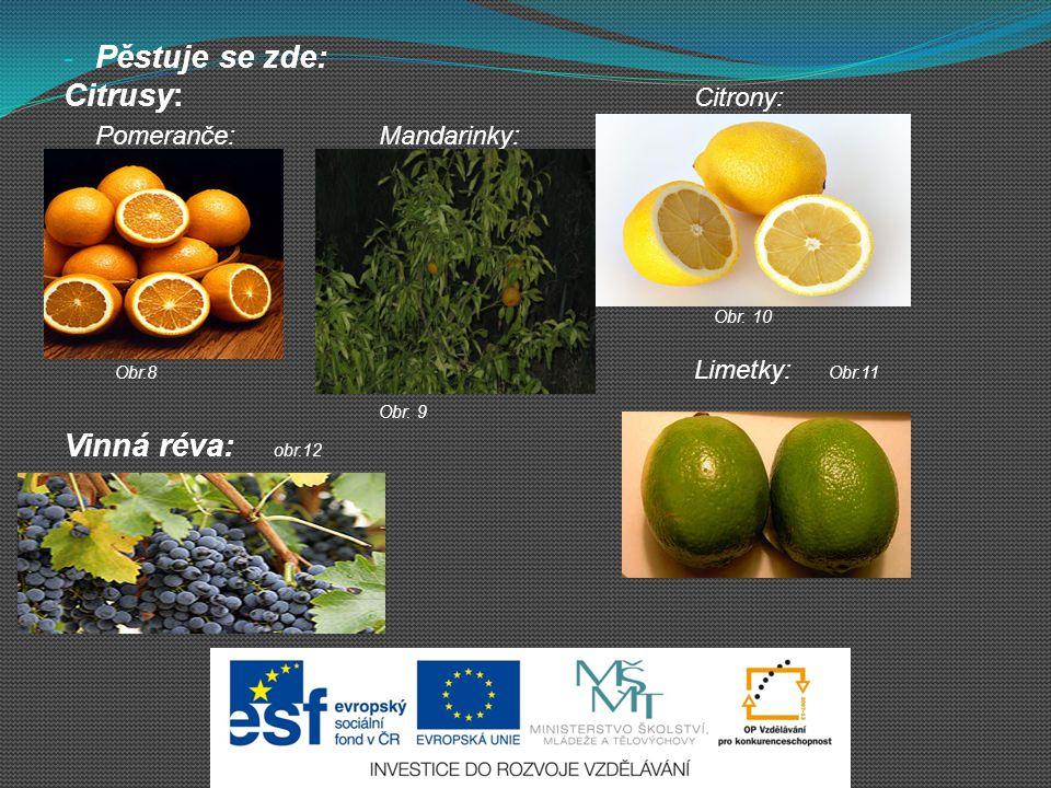 - Pěstuje se zde: Citrusy: Citrony: Pomeranče:Mandarinky: Obr.