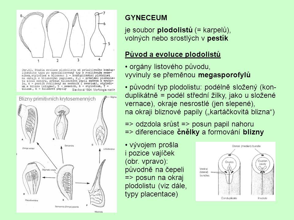 Původ a evoluce plodolistů orgány listového původu, vyvinuly se přeměnou megasporofylů původní typ plodolistu: podélně složený (kon- duplikátně = podé