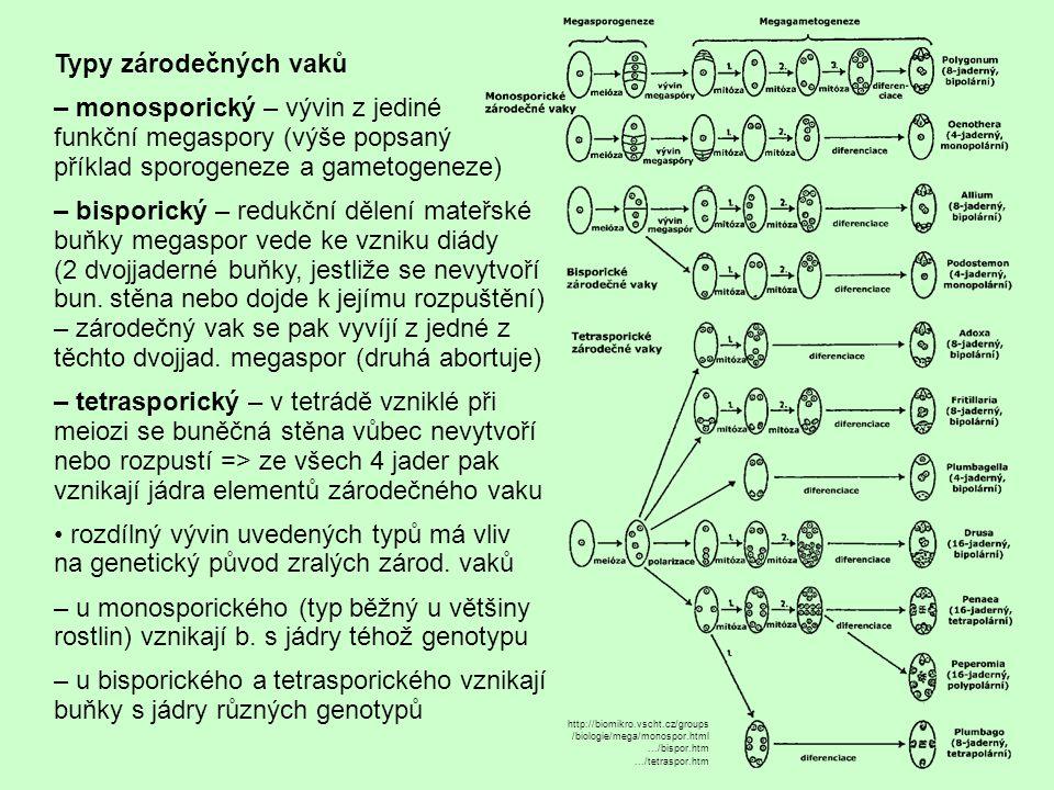 Typy zárodečných vaků – monosporický – vývin z jediné funkční megaspory (výše popsaný příklad sporogeneze a gametogeneze) – bisporický – redukční děle