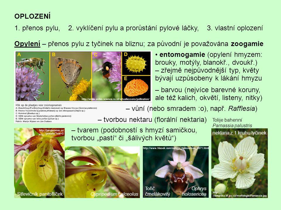 OPLOZENÍ 1. přenos pylu, 2. vyklíčení pylu a prorůstání pylové láčky, 3. vlastní oplození Opylení – přenos pylu z tyčinek na bliznu; za původní je pov