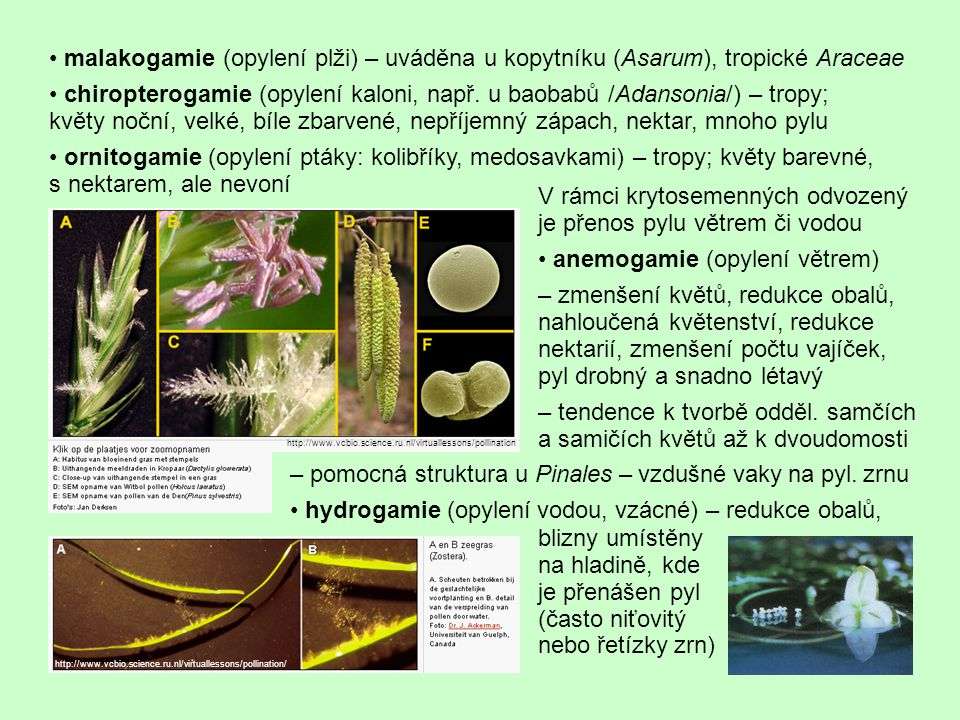 malakogamie (opylení plži) – uváděna u kopytníku (Asarum), tropické Araceae chiropterogamie (opylení kaloni, např. u baobabů /Adansonia/) – tropy; kvě