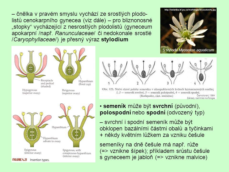 Typy gynecea, placentace apokarpní gyneceum (zřejmě původní typ) – jednotlivé nesrostlé plodolisty, označované též jako jednoplodolistové pestíky; může jich být větší počet (Magnolia) až 1 (Fabaceae) Slavíková 1984: Morfologie rostlin Helleborus viridis http://botanika.bf.jcu.cz/systematikaweb /files_magnoliophyta/ helleborusviridis plodyprurez1elportalet11072002.jpg http://www.biologie.uni-hamburg.de/b-online /library/webb/BOT410/Angiosperm/Aster/DiskFlrDiag240Stigma.jpg srůst okrajů plodolistu => břišní šev => žilka vzniklá spojením dvou postranních žilek (pův.