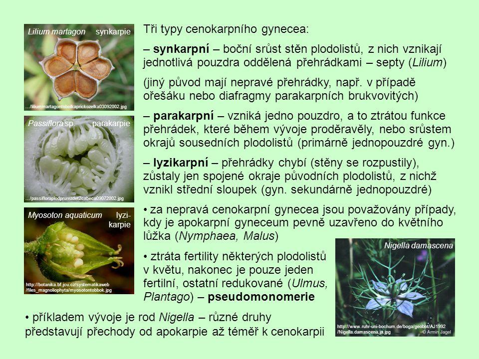 Tři typy cenokarpního gynecea: – synkarpní – boční srůst stěn plodolistů, z nich vznikají jednotlivá pouzdra oddělená přehrádkami – septy (Lilium) (ji