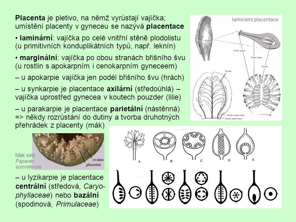 """Vajíčko vzniká z meristému placenty, kde se zakládá hrbolek – základ nucellu na bázi hrbolku 1–2 valy, z nichž se s vyvíjejícím se vajíčkem vytvářejí vaječné obaly – integumenty (postupně obalí nucellus až na vrchol, jako otvor zůstane jen mikropyle) – původní typ představují 2 obaly (většina jednoděložných rostlin + choripetalní dvouděložné – bazální trikolpátní + rosidová větev) – odvozený typ – 1 obal (sympetalní dvouděložné rostliny, ± asteridová větev; na pomezí stojí Ericaceae, tam je obojí) – vzácný je nejodvozenější typ, vajíčka bezobalná vajíčko pojí k placentě poutko – funiculus – s cévním svazkem vedoucím živiny (u druhů s redukovaným poutkem vajíčko """"sedí přímo na placentě) chaláza je místo na bázi nucellu, kde proniká cévní svazek z poutka do vajíčka tvary vajíček – vývojově původní typ je vajíčko přímé (atropické); také v ontogenezi jsou zpočátku všechna vajíčka přímá a další typy vznikají nepravidelností růstu pletiva => srůsty a natočení vajíček – vajíčko příčné (kampylotropické) – poutko vedle mikropyle, jež směřuje dolů – vajíčko obrácené (anatropické) je považováno za odvozený typ; integument na jedné straně srůstá s poutkem (zde pak na osemení zůstane jizva – raphe) – redukce vajíčka (Orchidaceae) – zárodečný vak se vyvíjí přímo v placentě"""