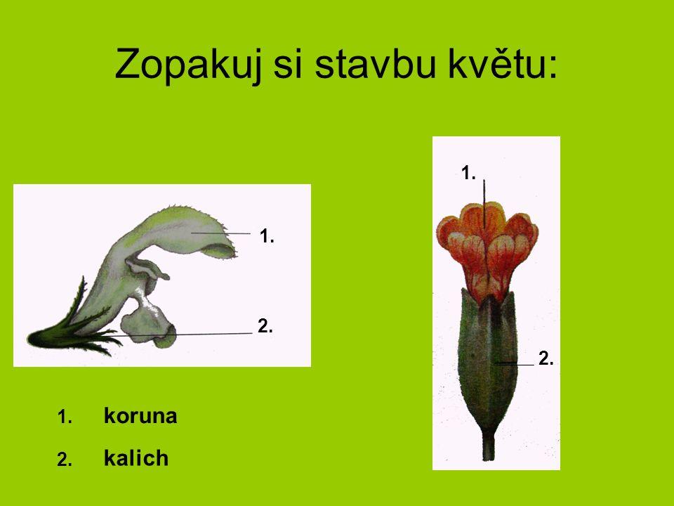 Zopakuj si stavbu květu: 1. 2. 1. 2. koruna kalich