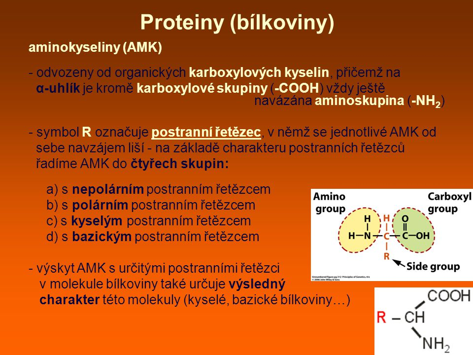 Proteiny (bílkoviny) aminokyseliny (AMK) - odvozeny od organických karboxylových kyselin, přičemž na α-uhlík je kromě karboxylové skupiny (-COOH) vždy ještě navázána aminoskupina (-NH 2 ) - symbol R označuje postranní řetězec, v němž se jednotlivé AMK od sebe navzájem liší - na základě charakteru postranních řetězců řadíme AMK do čtyřech skupin: a) s nepolárním postranním řetězcem b) s polárním postranním řetězcem c) s kyselým postranním řetězcem d) s bazickým postranním řetězcem - výskyt AMK s určitými postranními řetězci v molekule bílkoviny také určuje výsledný charakter této molekuly (kyselé, bazické bílkoviny…)