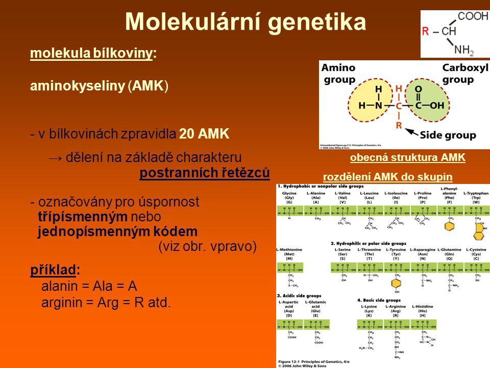 Molekulární genetika molekula bílkoviny: aminokyseliny (AMK) - v bílkovinách zpravidla 20 AMK → dělení na základě charakteru postranních řetězců - označovány pro úspornost třípísmenným nebo jednopísmenným kódem (viz obr.