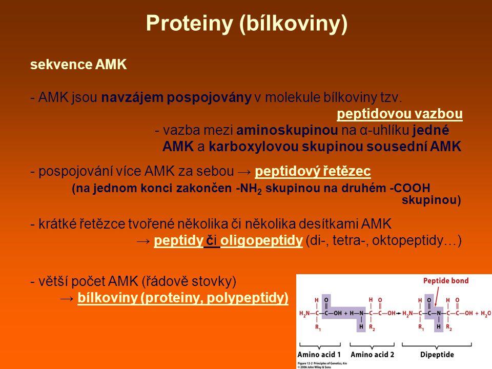 Proteiny (bílkoviny) sekvence AMK - AMK jsou navzájem pospojovány v molekule bílkoviny tzv.