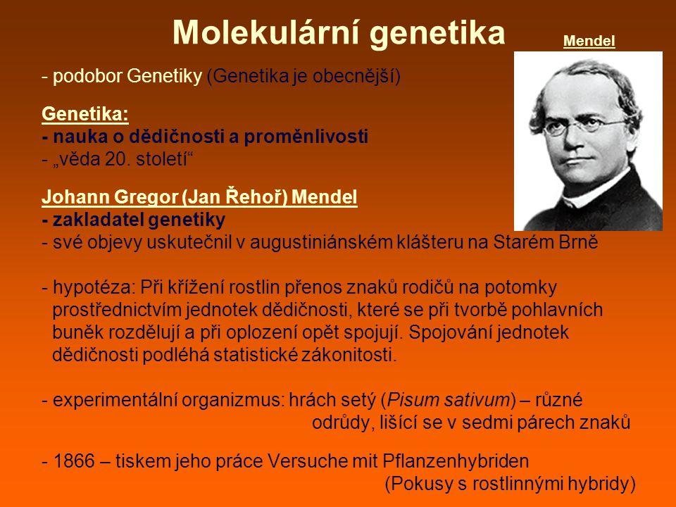 """Molekulární genetika - podobor Genetiky (Genetika je obecnější) Genetika: - nauka o dědičnosti a proměnlivosti - """"věda 20."""