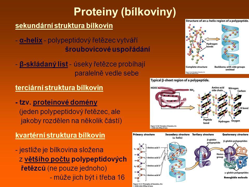 Proteiny (bílkoviny) sekundární struktura bílkovin - α-helix - polypeptidový řetězec vytváří šroubovicové uspořádání - β-skládaný list - úseky řetězce probíhají paralelně vedle sebe terciární struktura bílkovin - tzv.