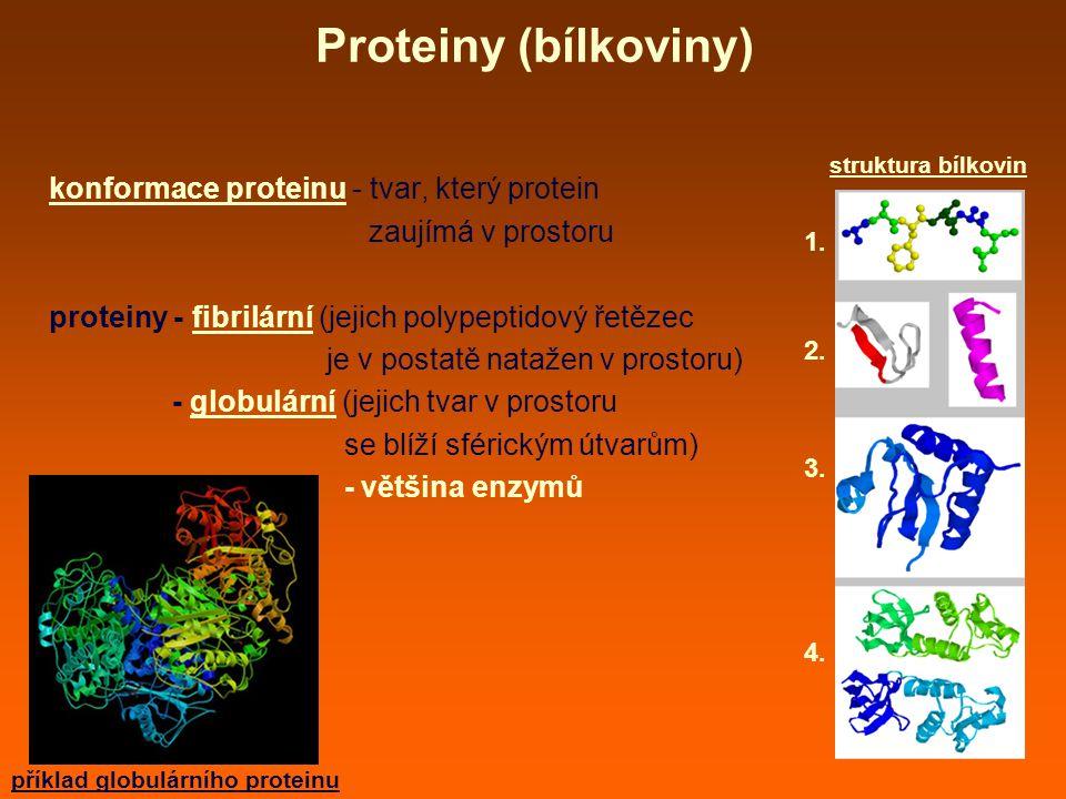 Proteiny (bílkoviny) konformace proteinu - tvar, který protein zaujímá v prostoru proteiny - fibrilární (jejich polypeptidový řetězec je v postatě natažen v prostoru) - globulární (jejich tvar v prostoru se blíží sférickým útvarům) - většina enzymů struktura bílkovin 1.