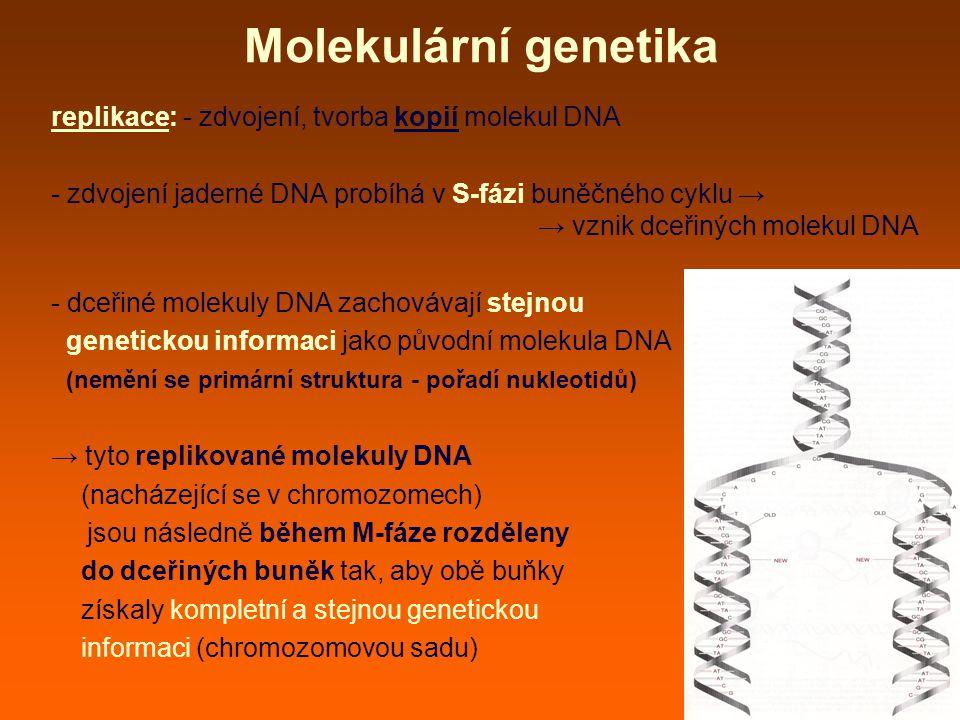 Molekulární genetika replikace: - zdvojení, tvorba kopií molekul DNA - zdvojení jaderné DNA probíhá v S-fázi buněčného cyklu → → vznik dceřiných molekul DNA - dceřiné molekuly DNA zachovávají stejnou genetickou informaci jako původní molekula DNA (nemění se primární struktura - pořadí nukleotidů) → tyto replikované molekuly DNA (nacházející se v chromozomech) jsou následně během M-fáze rozděleny do dceřiných buněk tak, aby obě buňky získaly kompletní a stejnou genetickou informaci (chromozomovou sadu)