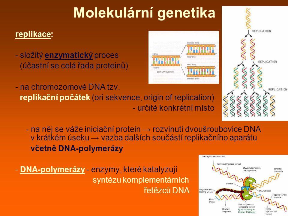 Molekulární genetika replikace: - složitý enzymatický proces (účastní se celá řada proteinů) - na chromozomové DNA tzv.