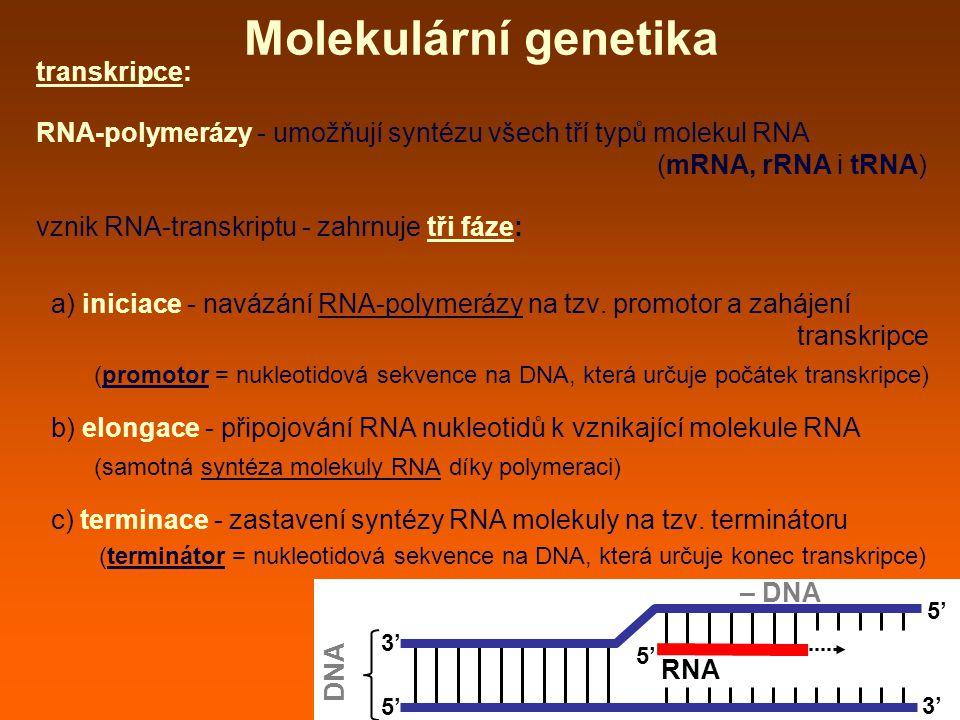 Molekulární genetika transkripce: RNA-polymerázy - umožňují syntézu všech tří typů molekul RNA (mRNA, rRNA i tRNA) vznik RNA-transkriptu - zahrnuje tři fáze: a) iniciace - navázání RNA-polymerázy na tzv.