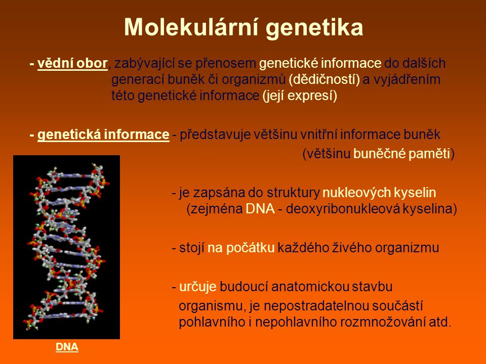 Molekulární genetika - vědní obor, zabývající se přenosem genetické informace do dalších generací buněk či organizmů (dědičností) a vyjádřením této genetické informace (její expresí) - genetická informace - představuje většinu vnitřní informace buněk (většinu buněčné paměti) - je zapsána do struktury nukleových kyselin (zejména DNA - deoxyribonukleová kyselina) - stojí na počátku každého živého organizmu - určuje budoucí anatomickou stavbu organismu, je nepostradatelnou součástí pohlavního i nepohlavního rozmnožování atd.
