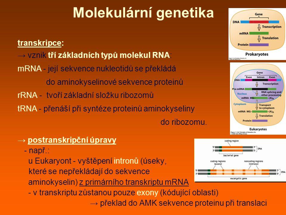 Molekulární genetika transkripce: → vznik tří základních typů molekul RNA: mRNA - její sekvence nukleotidů se překládá do aminokyselinové sekvence proteinů rRNA - tvoří základní složku ribozomů tRNA - přenáší při syntéze proteinů aminokyseliny do ribozomu.