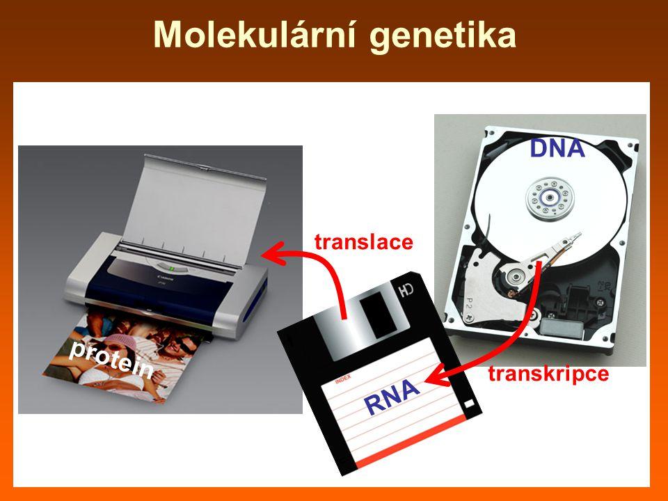 Molekulární genetika protein RNA DNA transkripce translace