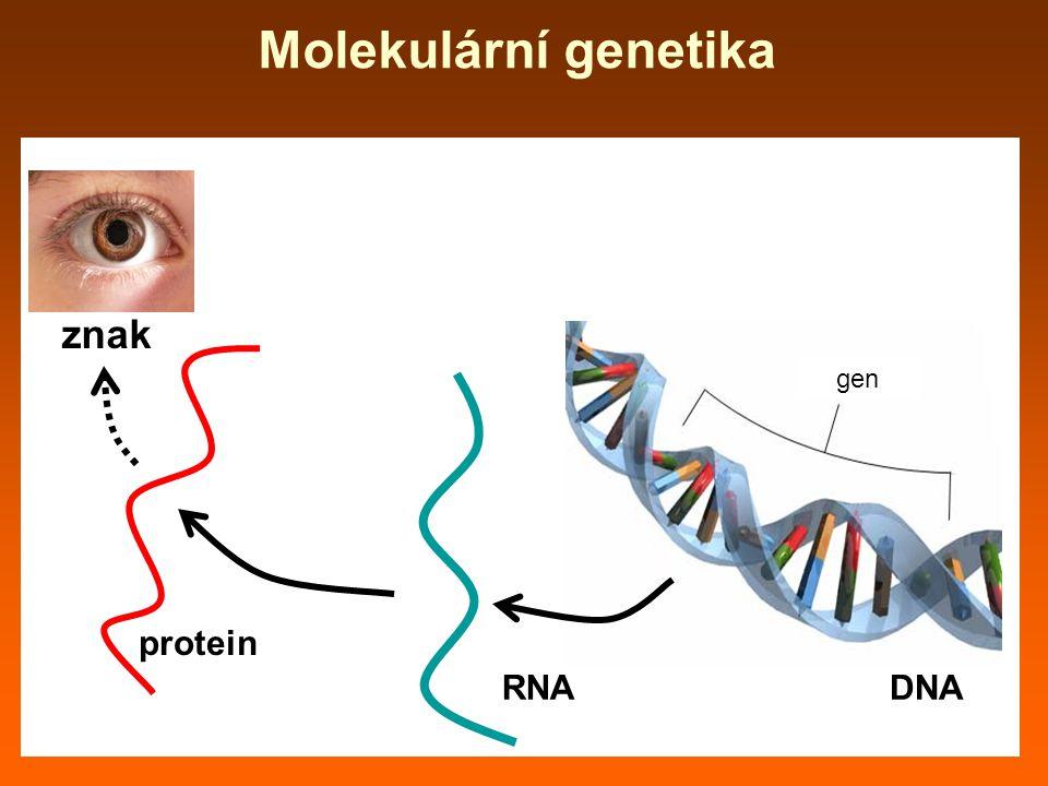 Molekulární genetika gen DNARNA protein znak