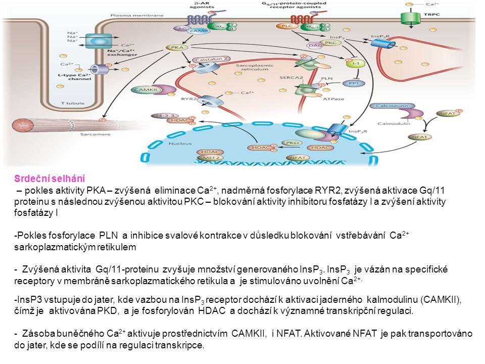 Srdeční selhání – pokles aktivity PKA – zvýšená eliminace Ca 2+, nadměrná fosforylace RYR2, zvýšená aktivace Gq/11 proteinu s následnou zvýšenou aktiv