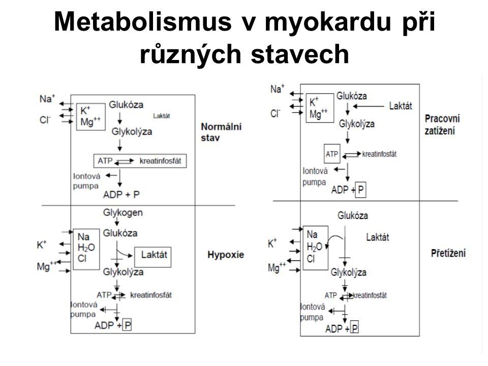 Metabolismus v myokardu při různých stavech
