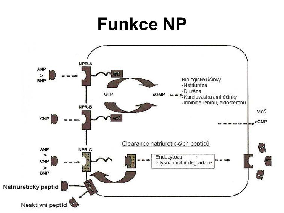 Funkce NP